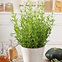 Growing Herbs From Seed