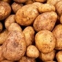 Care & Cultivation Of Potatoes