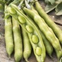 How To Grow Beans From Seed