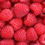 Care & Cultivation Of Raspberry Canes